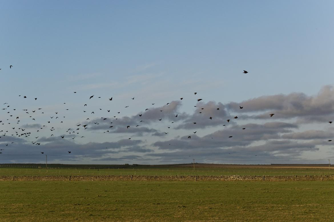 Birds - collateral victims of intensive agriculture / Data news